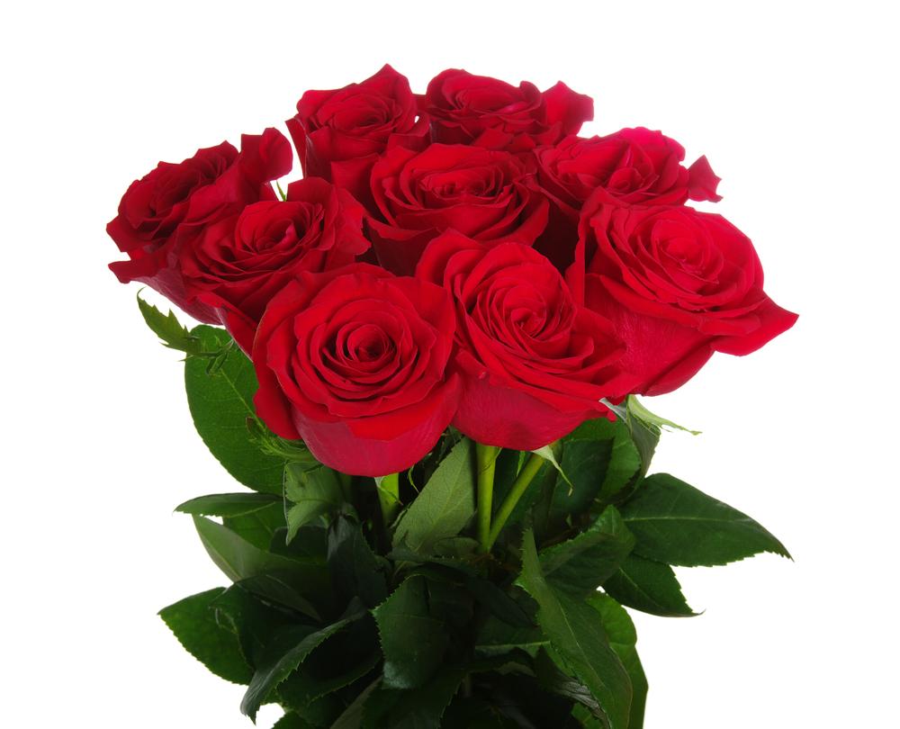 12 Roses +£39.00